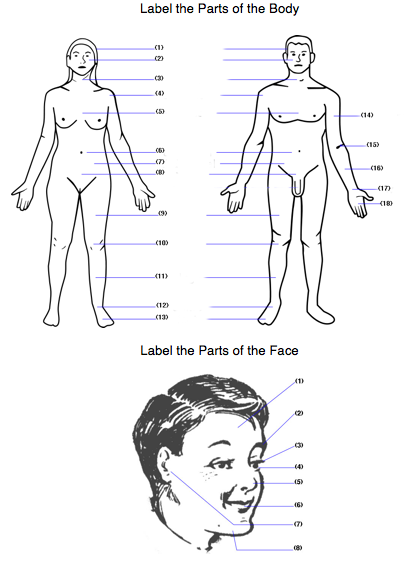 Body Worksheet Label Body Face Parts Englisheslefl