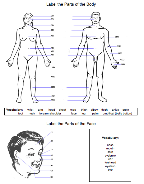 body & face worksheet with vocabulary
