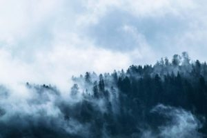 a mysterious misty forest