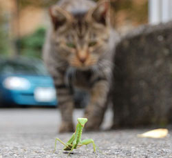 cat notices green insect
