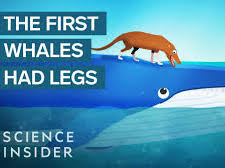 Listen to how whales became so big!